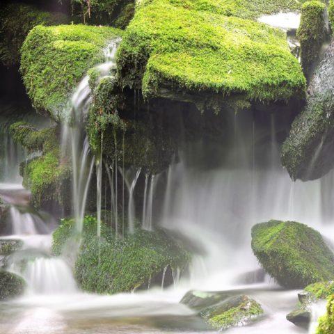 Muschio in cascata - Sanifica Naturale